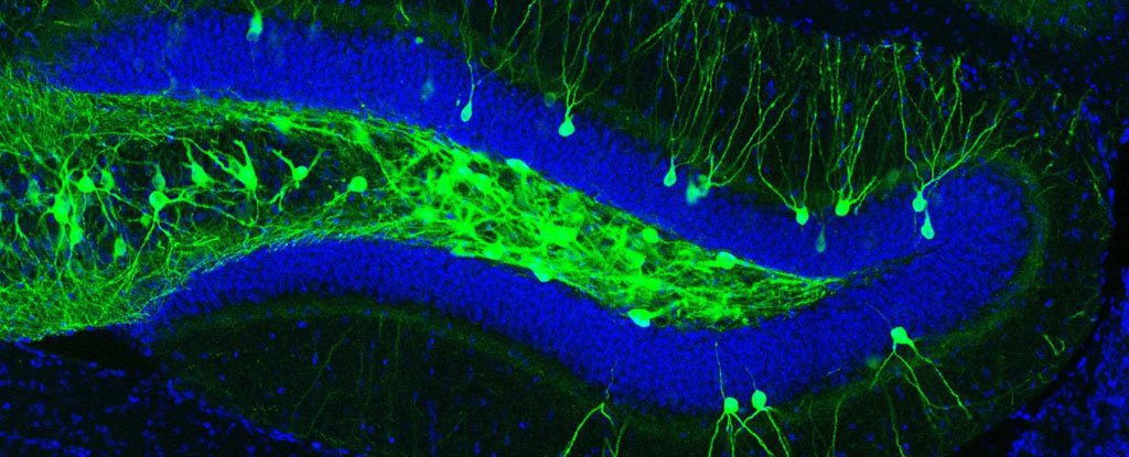Scientists use light to reactivate lost memories in mice with Alzheimer's symptoms – ScienceAlert