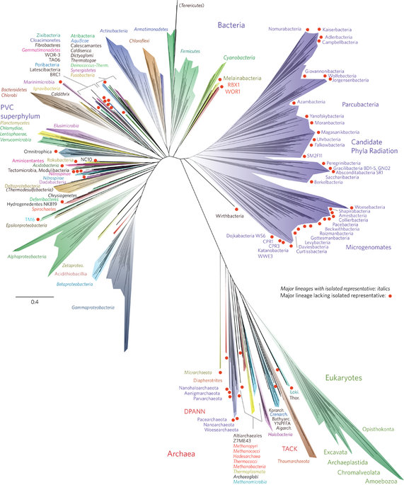 A new view of the tree of life : Nature Microbiology