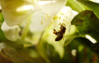 Widely used pesticide can harm bees in some cases -EPA – Business Insider